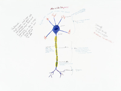 NerviTheBabyRattle (Nerve system)