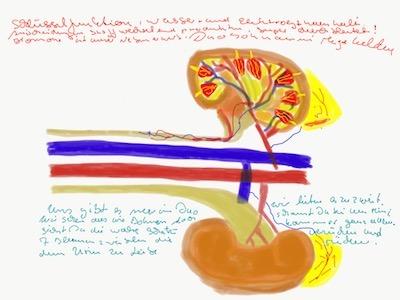 NinaKidney (Kidney)
