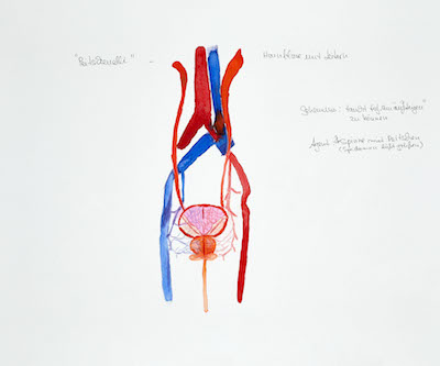WhippingElli (Urinary bladder)
