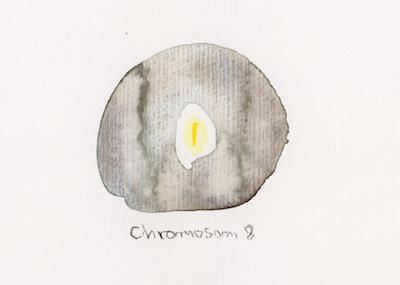 Chromosome 8