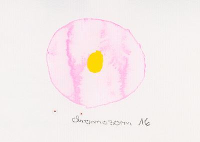 Chromosome 16