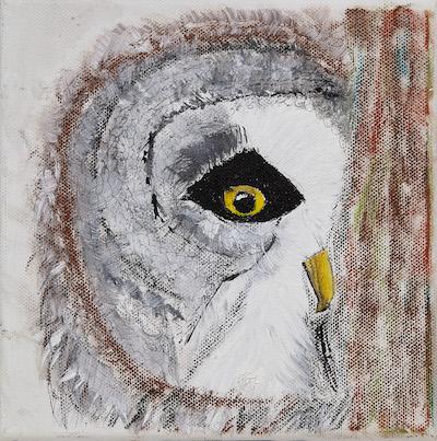Owl(face)