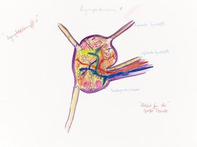 Lymphschlumpf 01 (Lymphstadium)