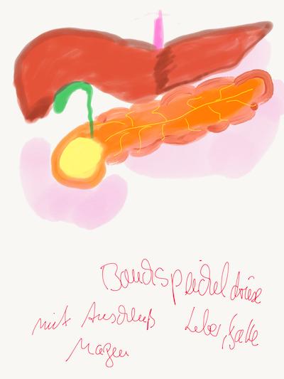 Paul Pankreas (Bauchspeicheldrüse)