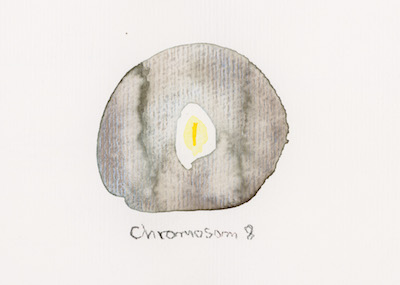 Chromosom 8