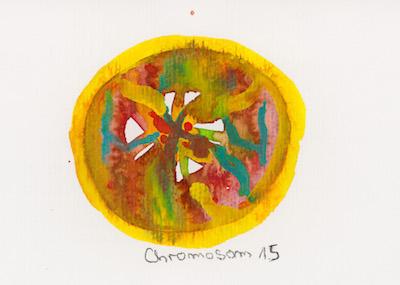 Chromosom 15